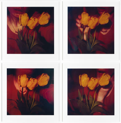 Yellow Tulips 1