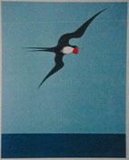 Pacific Frigate Bird; ART00044